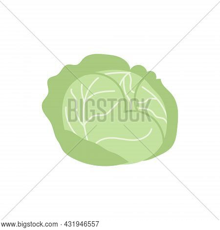 Cartoon White Cabbage Isolated. Vector Stock Illustration Of White Cabbage. Agricultural Crop On A W