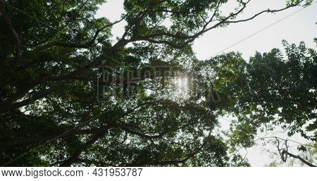 Tree canopy from low angle