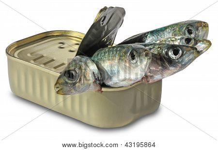 Canned sardines isolated on a white background poster