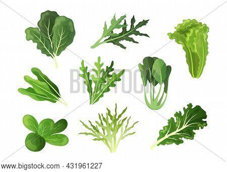 Salad Leaves. Cartoon Fresh Spinach And Kale, Endive Or Lettuce Foliage Of Organic Vegetables. Healt