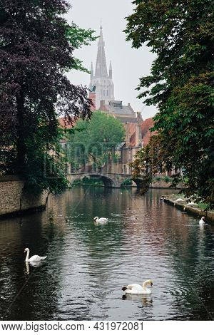 Picturesque view of Brugge - Bruges canal with white swans on water between old trees with Church of Our Lady in the background. Brugge, Belgium