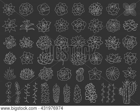 Succulent And Cacti Vector Set. Hand Drawn Desert Flower Illustration In Doodle Style. Set Plants Wi