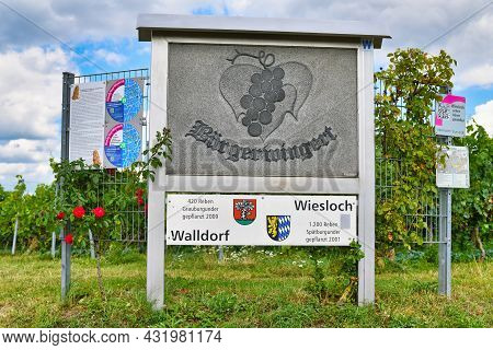 Wiesloch, Germany - August 2021: Sign For 'citizen Vineyard' In Front Of Pinot Gris Wine Plants