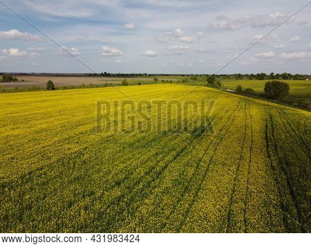 Picturesque Rapeseed Field Under The Blue Sky. Farmland Covered With Flowering Rapeseed, Aerial View