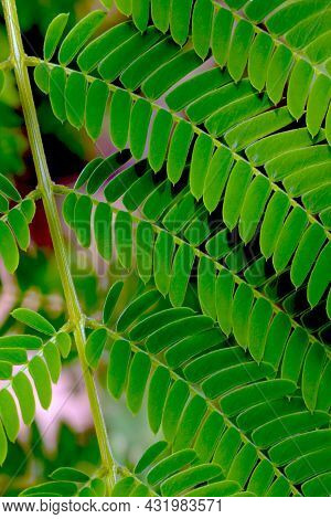 Young Green Branch Of A Tropical Plant, Vertical Photo
