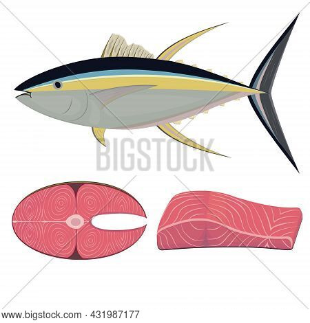 Tuna Fish In Section, Color Vector Isolated Illustration.