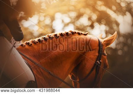 A Beautiful Sorrel Horse With A Rider In The Saddle Has A Braided Mane, Illuminated By Warm Sunlight