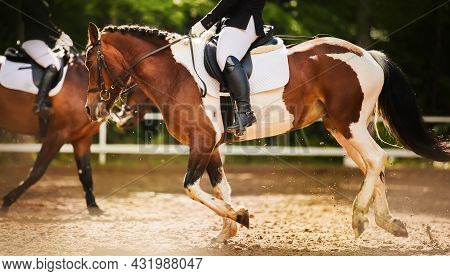 A Beautiful Piebald Horse With A Rider In The Saddle And With A Braided Mane Quickly Gallops Through