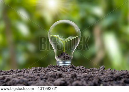 Trees Growing In Energy-saving And Energy-saving Bulbs Are Environmentally Friendly. Renewable Energ
