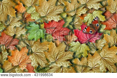 Colorful Autumn Fallen Maple Leaves Texture Background. Bright Red Peacock Butterfly On Fallen Maple
