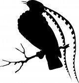 vector illustration of the bird series, bird of paradise poster
