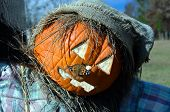 Silvery Checkerspot Moth attaches itself to the nose of a pumpkin scarecrow. poster