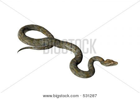 Isolated Snake Two