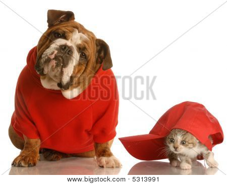 Bulldog In Red Sweater And Kitten With Hat