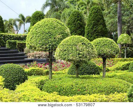 Beautiful green Fresh shrubs in the garden