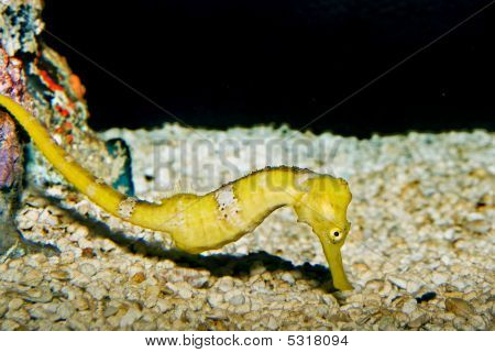 A seahorse image from the National Aquarium in Washington D.C poster