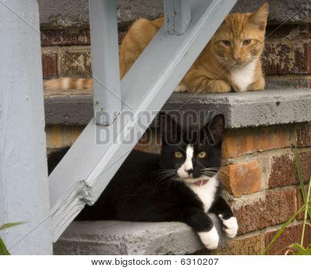 Porch Kitties