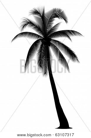 Silhouetted Coconut Tree