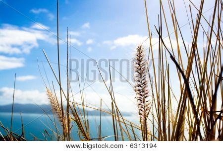 Grass Kernels