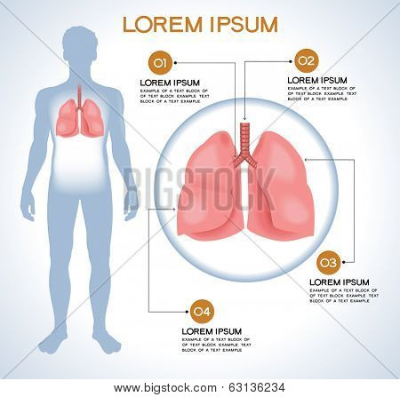 Lung. Modern medical infographics. Internal organs in a human body. Anatomy of people