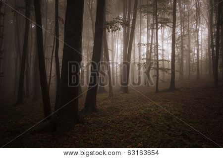 Mysterious dark forest with fog in autumn
