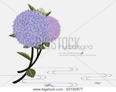 Elegant hydrangea