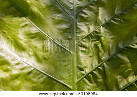Baibone leaf