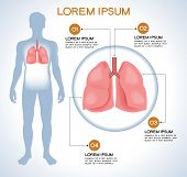Lung. Modern medical infographics. Internal organs in a human body. Anatomy of people poster