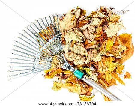 Pile of dead fall leaves swept by metal fan rake shot on white