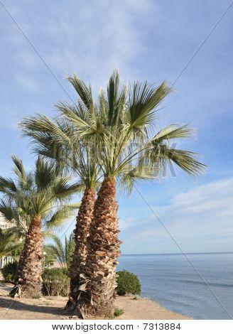 Vacation near mediterranean sea