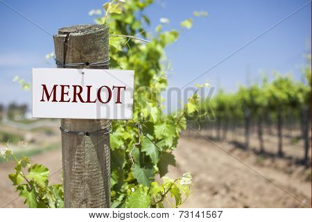 Merlot Sign On Post at the End of a Vineyard Row of Grapes.