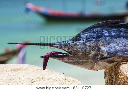 Sailfish Face Macro Closeup