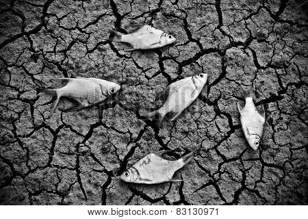 fish die on cracked earth / drought / river dried up / animal extinction / famine / no rain / drought