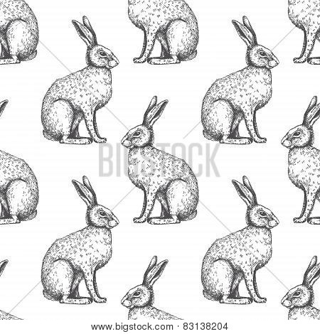 Vector Background With Hare Sketch.