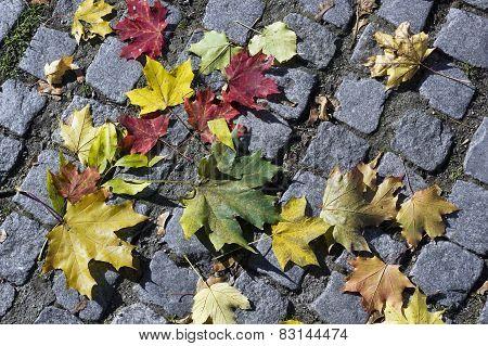 Maple Leaves On Stones