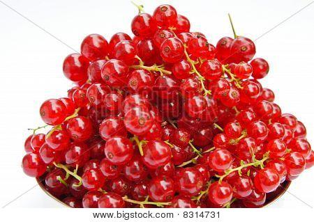 Fresh redcurrants