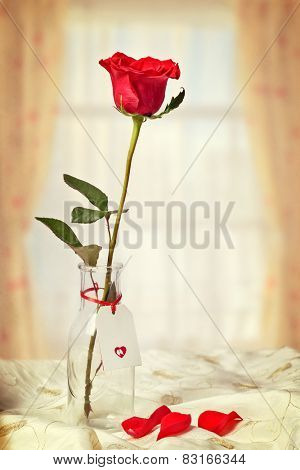 Single stem red rose in glass bottle against a window with fallen petals