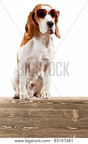 Sentry Dog In Sunglasses Isolated On White