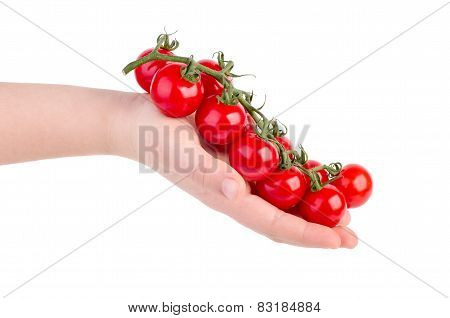 Hand Holding Cherry Tomatoes Branch