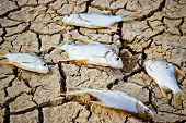 fish died on cracked earth / drought / river dried up /famine / scarcity / global warming / natural destruction / extinction poster