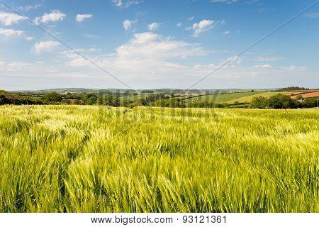 Cornish Countryside In Summer