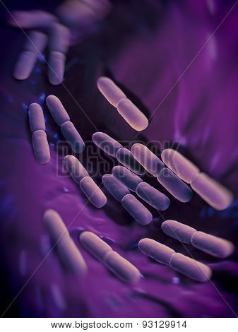 acidophile bacteria Cyanidium caldarium is an obligate acidophile this only certain kinds of bacteria and archaebacteria can survive.