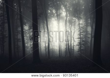 Mysterious forest with fog near clearing