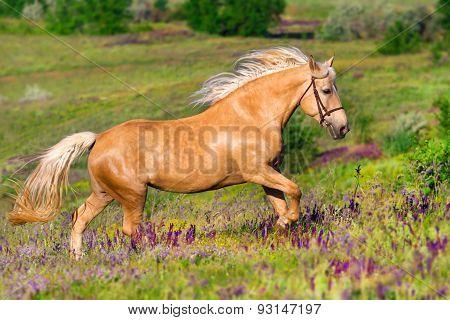 Beautiful horse run in flowers