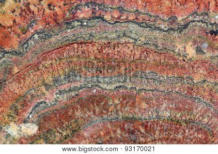 Fossilized Stromatolites