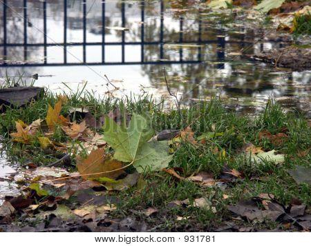 Mirror Of The Autumn