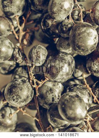 Grape Vintage Desaturated