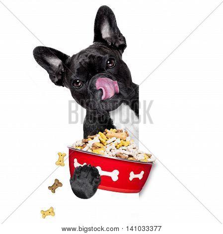 Hungry Dog Bowl