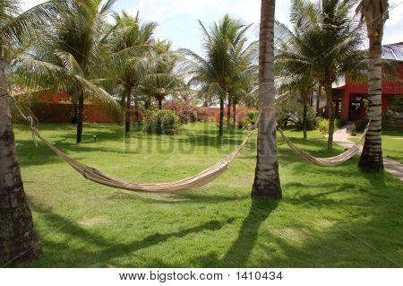 Sleeping Net