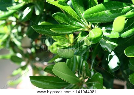 Mediterranean rhodies leaves elucidated by day sunlight